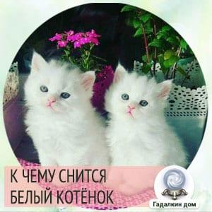 к чему снится маленький белый котенок