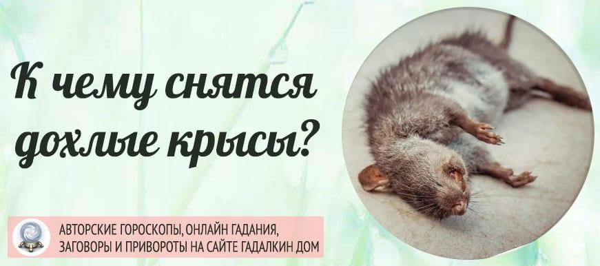 К чему снится дохлые крысы