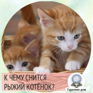 видеть во сне рыжего котенка