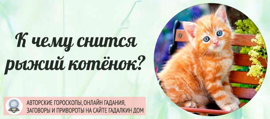 К чему снится рыжий котёнок
