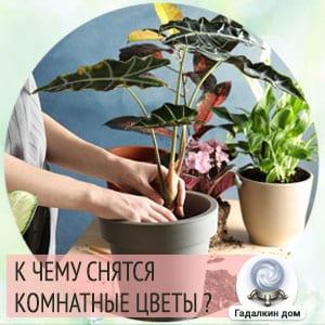 к чему снятся комнатные цветы в горшках