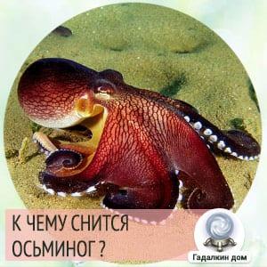 приснился осьминог