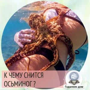 к чему снится осьминог женщине