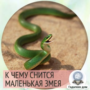приснились маленькие змеи