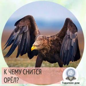 приснился орел