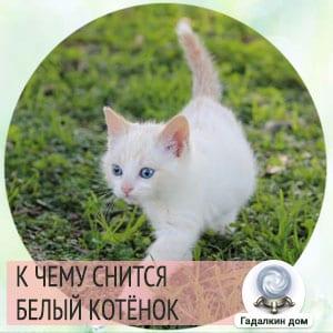 Сонник: белый котёнок