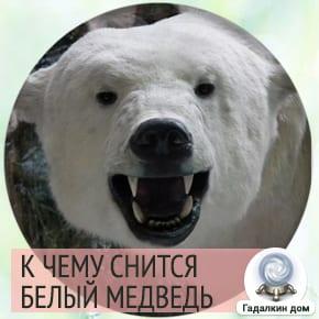 видеть во сне белого медведя