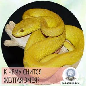 Сонник: жёлтая змея
