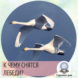 к чему снятся белые лебеди