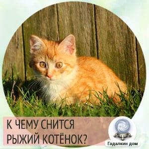к чему снится маленький рыжий котенок