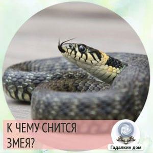 к чему снится змея женщине незамужней