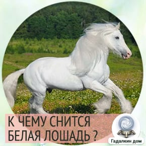 сон белая лошадь
