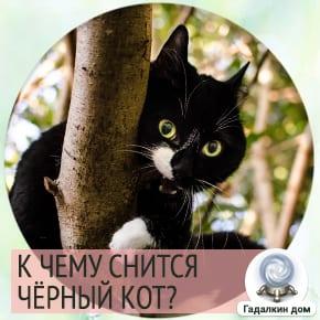 к чему снится большой черный кот
