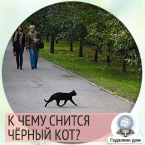 к чему снятся черные коты