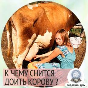 сон доить корову