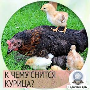 к чему снятся курицы
