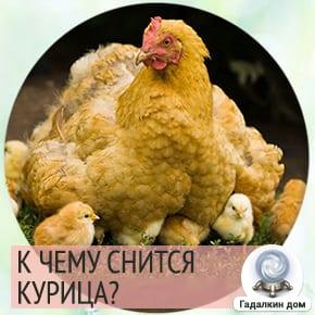 приснилась курица