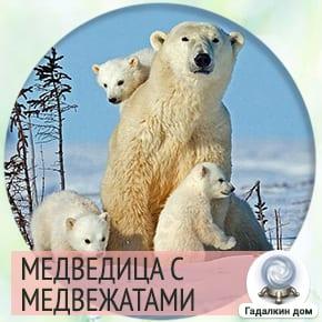 К чему снятся медведи с медвежатами женщине