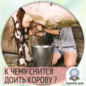 доить корову во сне что значит