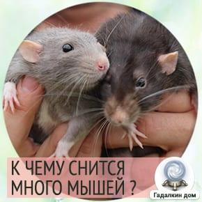 к чему снятся мыши в большом количестве