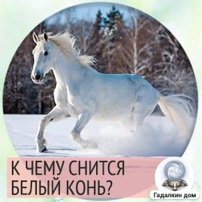 к чему снится белый конь женщине
