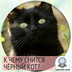 приснился черный кот