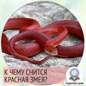 приснилась красная змея