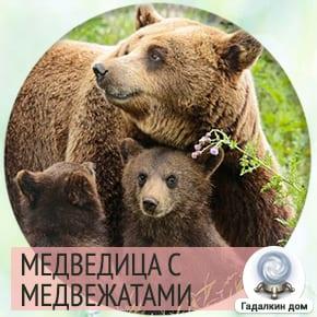 к чему снится медведица с медвежонком