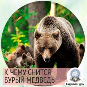 к чему снится бурый медведь женщине