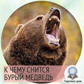 к чему снятся медведи бурые