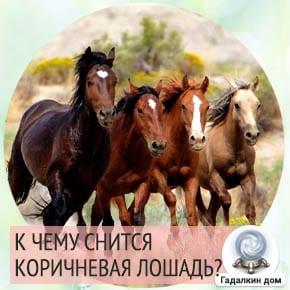 к чему снится лошадь девушке коричневая