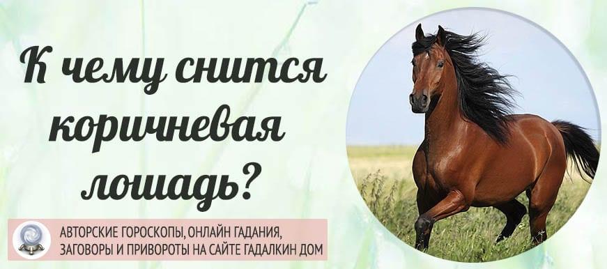К чему снится коричневая лошадь