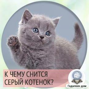 к чему снится котенок маленький серый