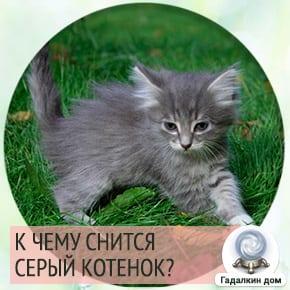 приснился серый котенок