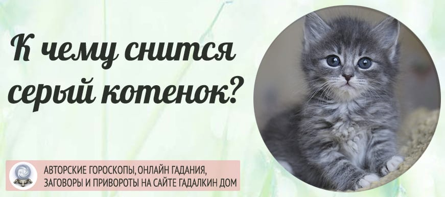 К чему снится серый котёнок