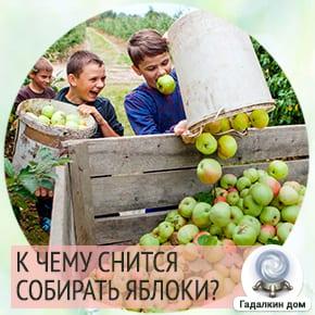 к чему снится собирать яблоки с земли