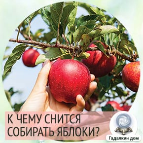 собирать яблоки во сне к чему это
