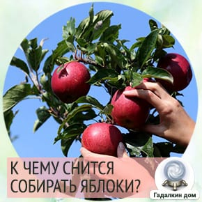 собирать во сне яблоки