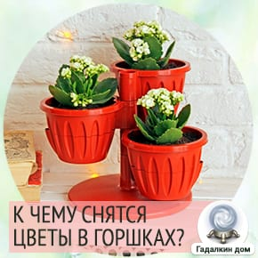 к чему снится поливать цветы в горшках