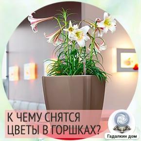 к чему снится сажать цветы в горшок