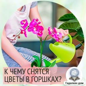 к чему снятся цветы в горшках цветущие