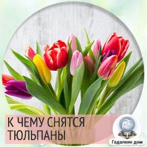к чему снятся тюльпаны разноцветные