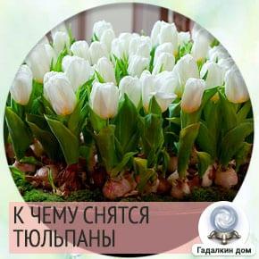 к чему снятся красные тюльпаны