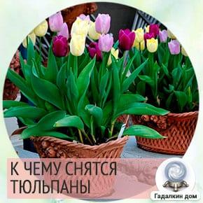 к чему снятся желтые тюльпаны