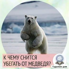 убегать во сне от медведя