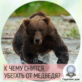 к чему снится убегать от медведя женщине