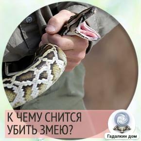 к чему снится убийство змеи