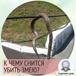 убить змею во сне что означает
