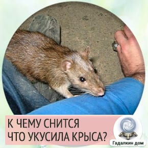 крыса укусила во сне за руку
