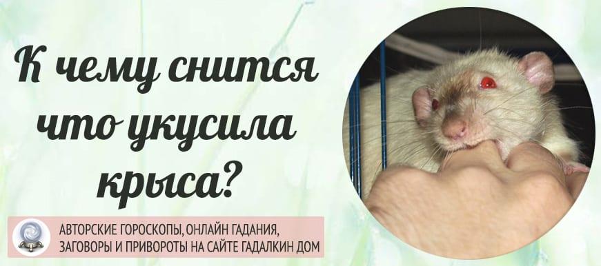 К чему снится что укусила крыса